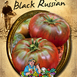 Tomate Black Russian