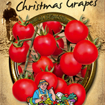 Tomate Christmas Grapes