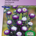 Aster-Garden-Hit-Blue-tipped-White-Sommeraster-