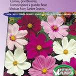 Cosmos Sensation Mixed (Aster)