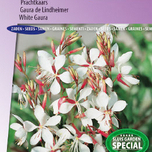 Prachtkerze The Bride (Gaura)