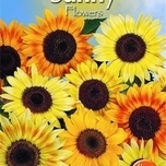 sunflowers-helianthus-annuus-music-box