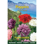 Poppies of the world – Papaver Paeoniflorum Gef. Misch.