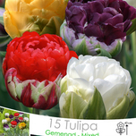 Tulpe Ice Cream mischung (Großpackung)