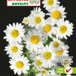 Margerite Ox-Eye White Breeze - Chrysanthe