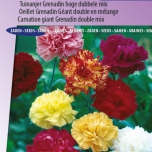 Nelke Grenadin Mix – Dianthus